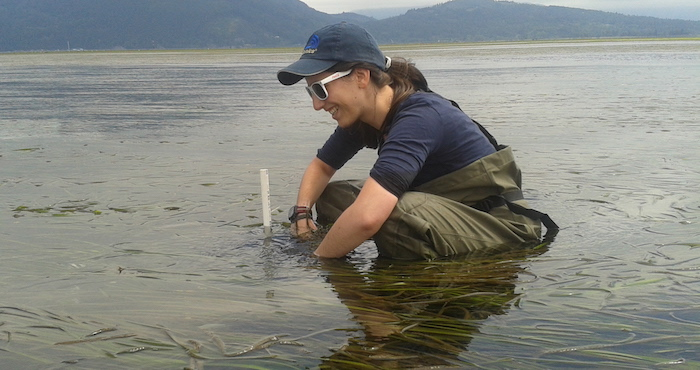 Lauren surveys seagrass density in Samish Bay, Wash.