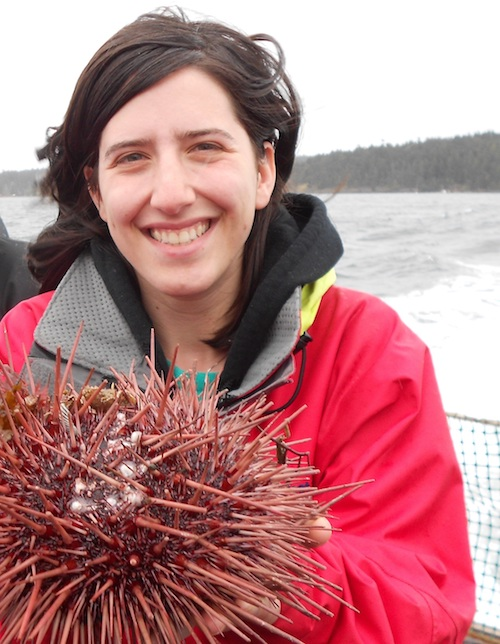 Lauren holds a huge sea urchin during a trawl off of San Juan Island.